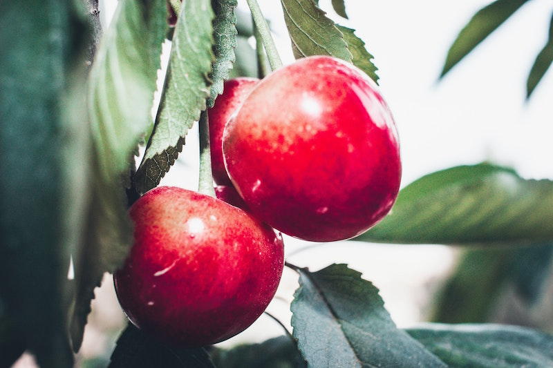 Cerises © Photo by Zenad Nabil on Unsplash